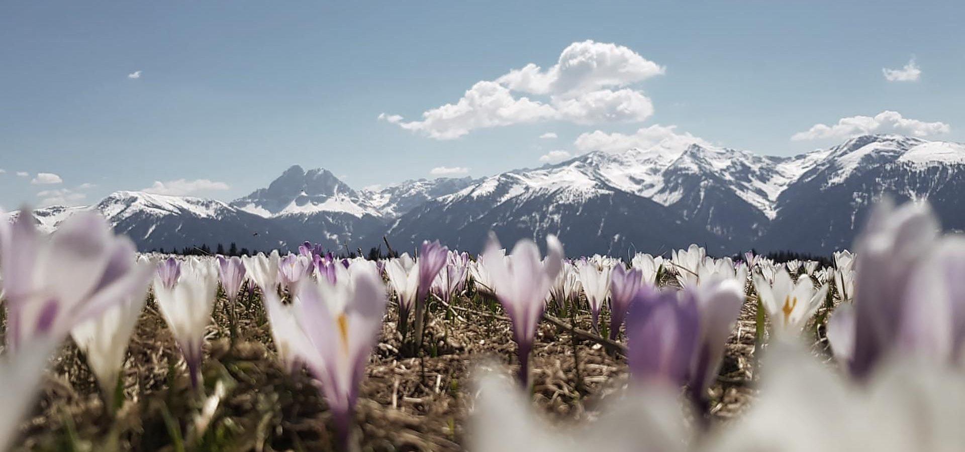 Frühling in den Bergen genießen